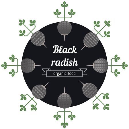 radish: Black radish vegetables illustration. Healthy Organic vegetarian food. Illustration