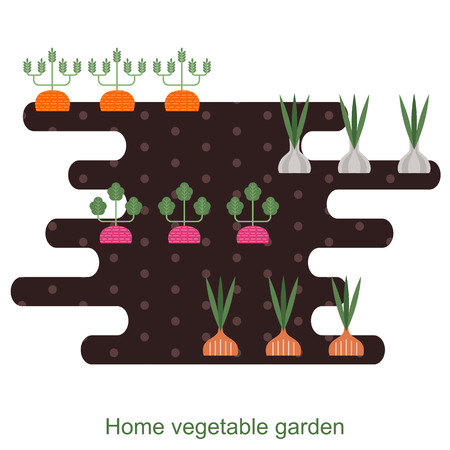 the land of menu: Vegetables garden background with carrots, garlic, onions, radishes