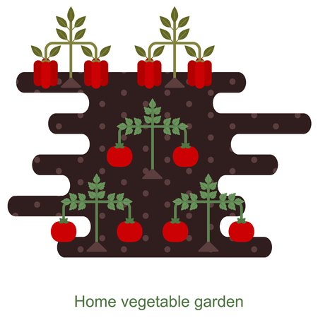 menu land: Vegetables garden background with tomato and bell pepper plants Illustration