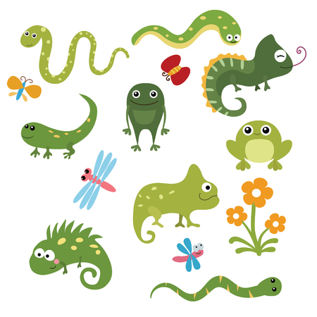 reptiles: Set of different reptiles on white background.
