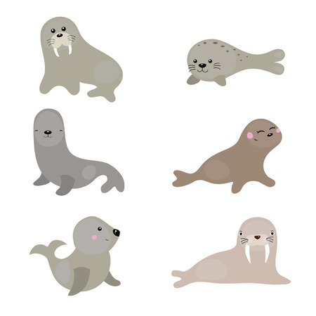 Set of different walruses and sea lions on white background.