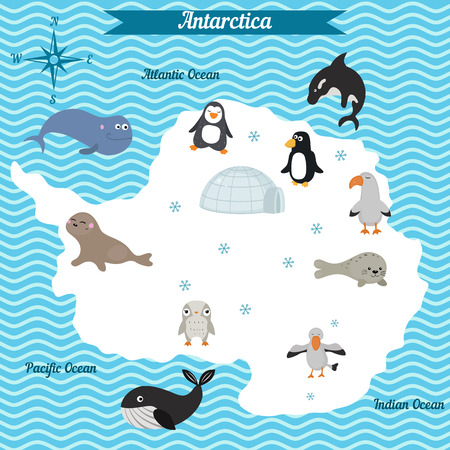 mammals: Cartoon map of Antarctica continent with different animals. Colorful cartoon illustration for children and kids. Antarctica mammals and sea life. Cartoon design concept for kids education,poster design.