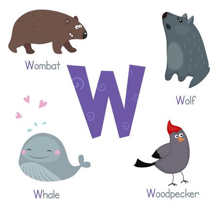 wombat: Alfabeto lindo vector zoo. animales de dibujos animados divertidos: wombat, lobos, ballenas, pájaros carpinteros.