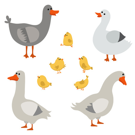Vector set of cute geese on white background. Geese made in cartoon style.