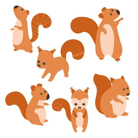 Set of cute squirrels on white background.