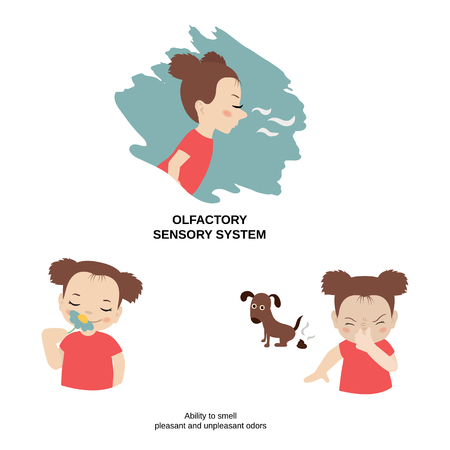 Vector illustration of human senses. Olfactory sensory system: ability to smell pleasant and unpleasant odors. Stock Illustratie