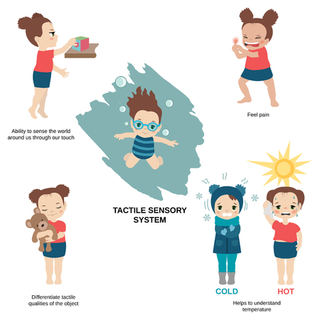 Vector illustration of human senses. Tactile sensory system: ability to sense the world around us through our touch, helps to understand temperature.