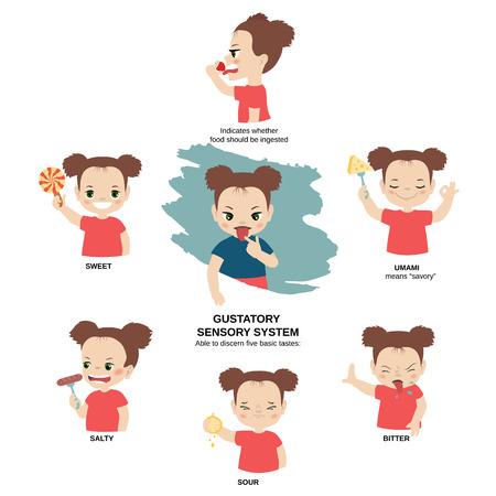 Ilustración de vector de los sentidos humanos. Sistema sensorial gustativo: capaz de discernir cinco sabores básicos: amargo, umami, agrio, salado, dulce. Ilustración de vector
