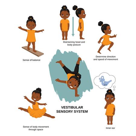 Ilustración de vector de los sentidos humanos. Sistema sensorial vestibular: sentido del equilibrio, mantenimiento de la postura de la cabeza y el cuerpo, dirección y velocidad de movimiento, oído interno.