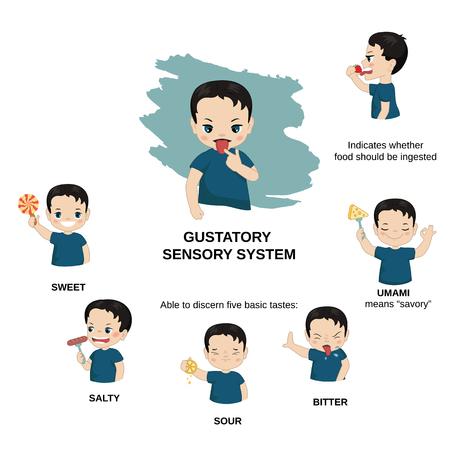 Vector illustration of human senses. Gustatory sensory system: able to discern five basic tastes - bitter, umami, sour, salty, sweet.