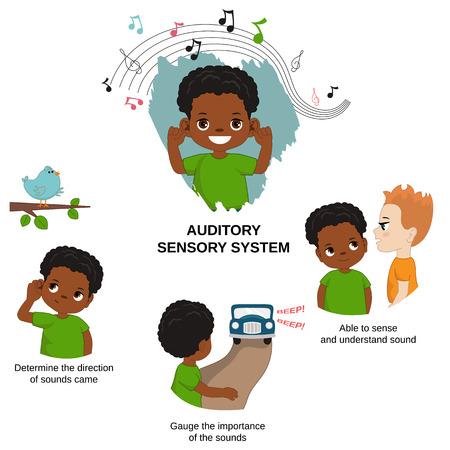 Illustrazione vettoriale dei sensi umani. Sistema sensoriale uditivo: in grado di percepire e comprendere il suono, misurare l'importanza dei suoni, determinare la direzione dei suoni.