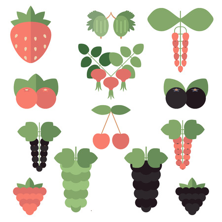Vector illustration of different kinds of berries on white background.
