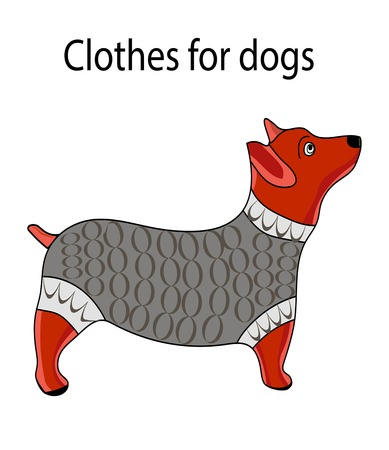 Clothes for dogs.Warm clothes for dogs. A dog in a warm waistcoat.