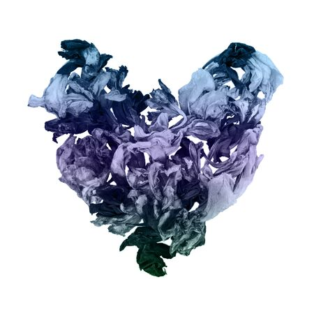 Dry iris flowers in shape of heart in gray-blue and purple monochrome on white Stock Photo