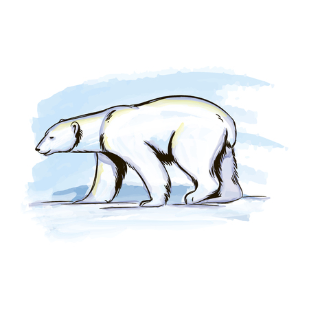 Vector water color illustration polar bear in the Arctic Stock Photo