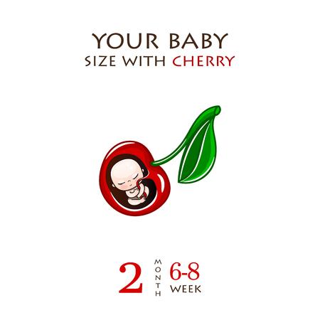 Entwicklungsstadien der Schwangerschaft, die Größe des Embryos für Wochen. Menschlicher Fötus im Mutterleib 1 bis 9 Monate. Vektorillustrationen