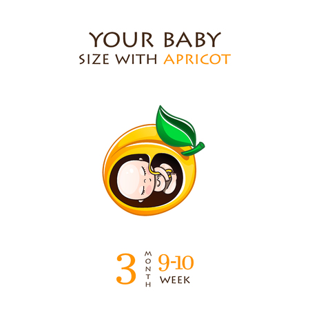 Stades de développement de la grossesse, la taille de l'embryon pendant des semaines. Fœtus humain à l'intérieur de l'utérus 1 à 9 mois. Illustrations vectorielles Banque d'images