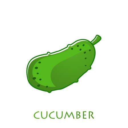 fresh cucumber vegetable isolated icon. cucumber for farm market, vegetarian salad recipe design. Vector illustration in flat style Stock Illustratie