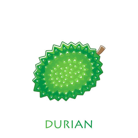King of fruits, durian. Vector illustration cartoon flat icon isolated on white. Stock Illustratie