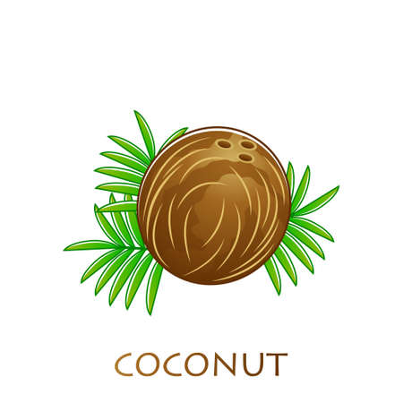 Coconut fruits poster in cartoon style. fresh juicy. isolated on white background including caption Coconut. Vector illustration.