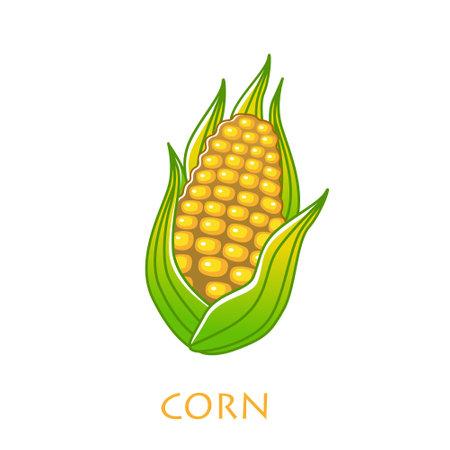 corncob vector illustration isolated on white background Illustration