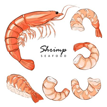 Collection boiled shrimp, shrimps without shell, shrimp meat. Shrimp prawn icons set. Boiled Shrimp drawing on a white background.