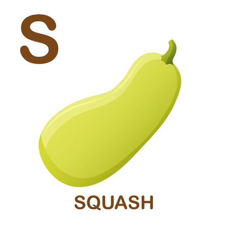 Squash icon with letter S. Cartoon style object. Vector Illustration.