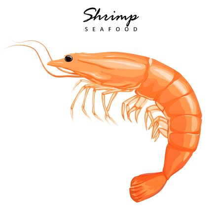 Shrimp icon. Boiled Prawn in shell on a white background.
