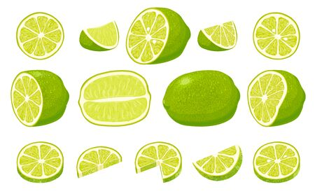 Fresh limes with leaves. Collection of different lime views. 向量圖像