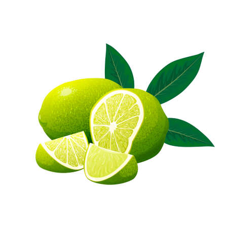 Fresh limes and lime slice with leaves. Vector illustration 向量圖像