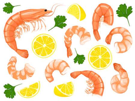 Shrimps, shrimps without shell, shrimp meat. Shrimp prawn icons set. Boiled Shrimp drawing on a white background.
