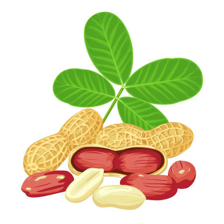 Peanut nut seed whole and shelled, green leaves groundnut collection. Organic food ingredient, traditional snack.