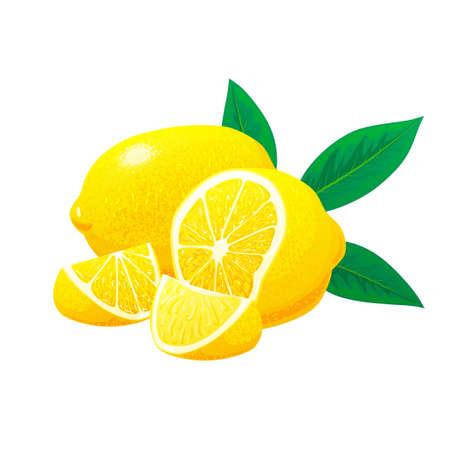 Lemon, slices of lemon with leaves. Vector. concept. Hand drawn vector illustration