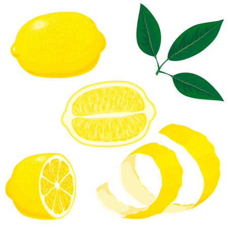 Set of whole, cut in half, sliced on pieces fresh lemons and leaves, lemon peel. Hand drawn vector illustration isolated on white background