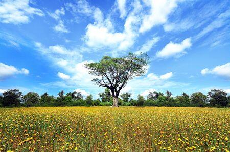 flower field Stock Photo - 10311700