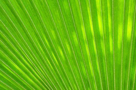 la l�nea de la hoja verde