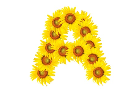 Beautiful yellow Sunflower alphabet, isolated. capital letter A photo