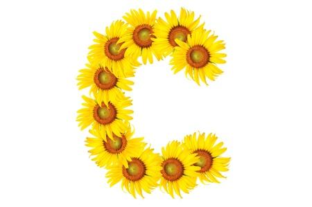 Beautiful yellow Sunflower alphabet, isolated. capital letter C photo
