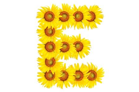 Beautiful yellow Sunflower alphabet, isolated. capital letter E Stock Photo