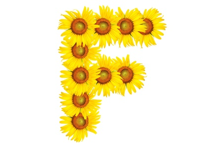 Beautiful yellow Sunflower alphabet, isolated. capital letter F