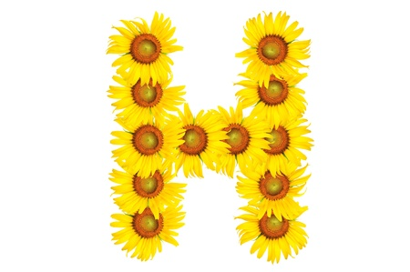 Beautiful yellow Sunflower alphabet, isolated. capital letter H photo