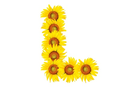 Beautiful yellow Sunflower alphabet, isolated. capital letter L photo