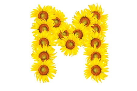 Beautiful yellow Sunflower alphabet, isolated. capital letter M photo