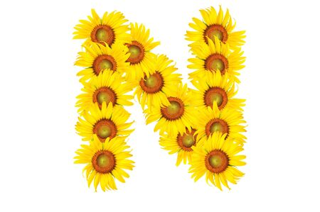 Beautiful yellow Sunflower alphabet, isolated. capital letter N photo