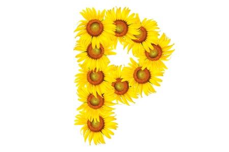 Beautiful yellow Sunflower alphabet, isolated. capital letter P Stock Photo