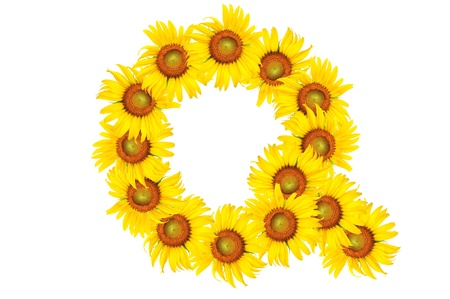 Beautiful yellow Sunflower alphabet, isolated. capital letter Q