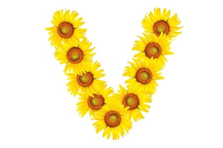 Alfabeto hermoso color amarillo girasol, aislados. capital de la letra V