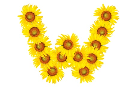 Beautiful yellow Sunflower alphabet, isolated. capital letter W