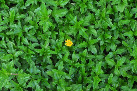 little yellow flower on green leafs