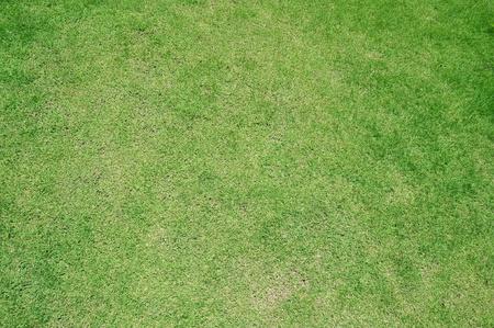 beautiful green grass background
